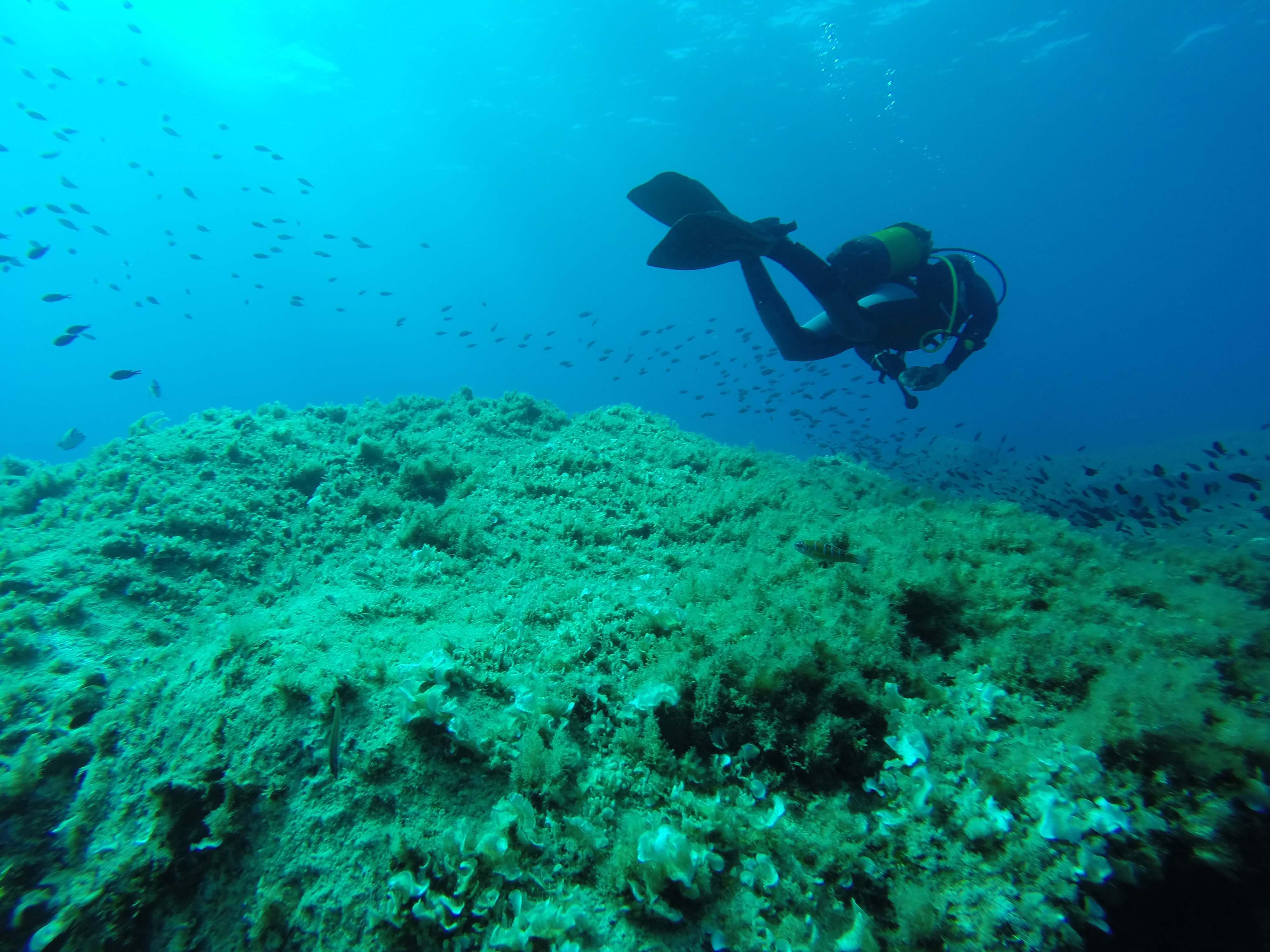 VACANCES EN CORSE : Corsica Online, le portail de vos vacances en Corse