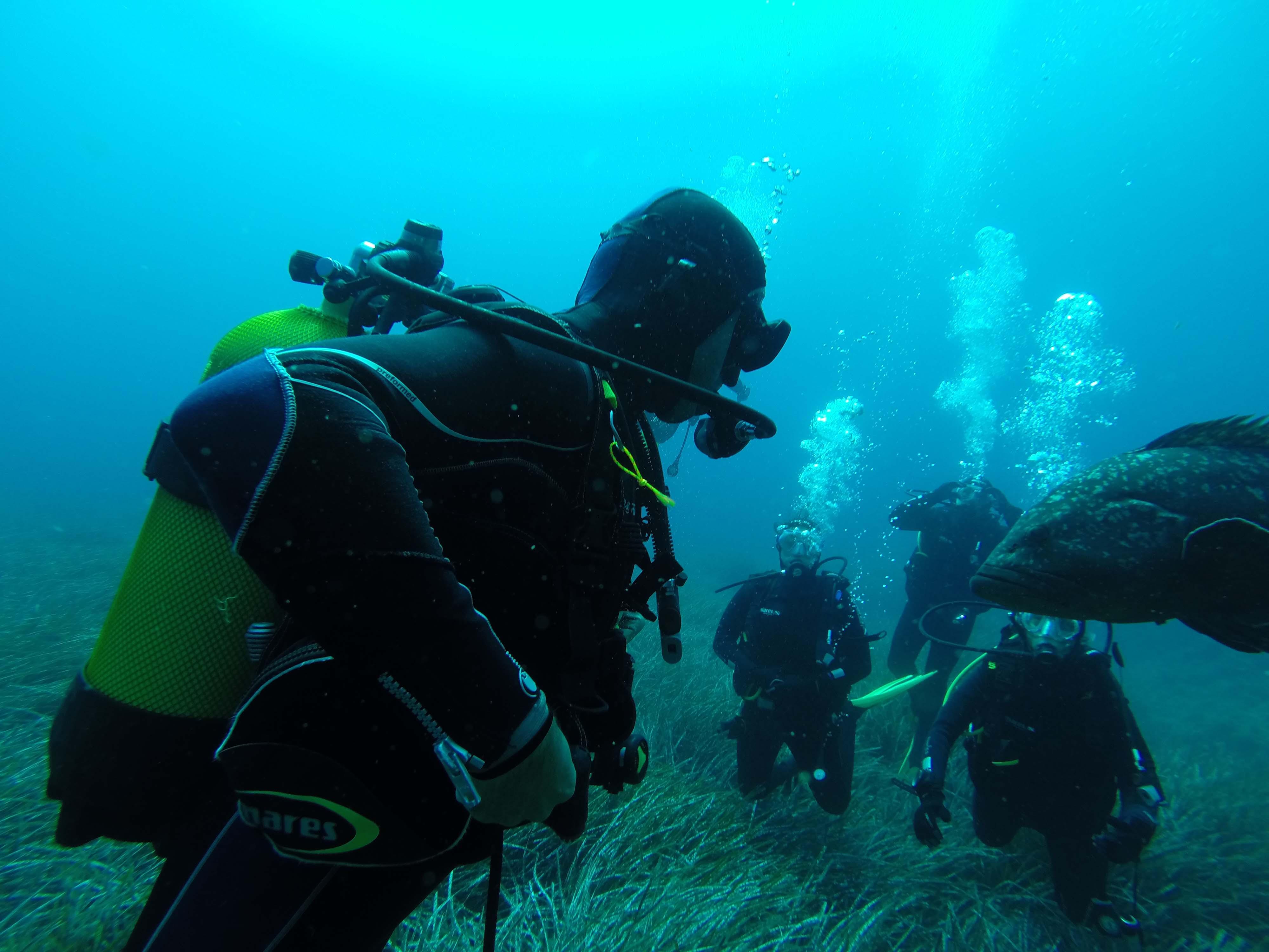 Plongée Corse : Subtortue, plongée sous marine en Corse Plongée Porto Vecchio